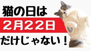 早速ですがみなさん、猫の日っていつか知っていますか? 語呂合わせで考えると何となくわかりますよね。 にゃんにゃんにゃんの日、2月22日です。 でもにゃんが2というのは ...
