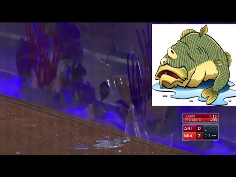 Foul Ball Shatters Marlins' Fish Tank. J.T Realmuto Lines A Fouler At The Gold Fsh.