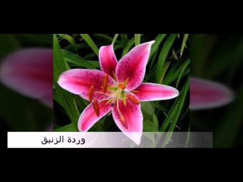 انواع الورود واسمائها Youtube