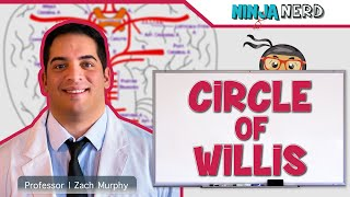 Circulatory System | Circle of Willis Circulation