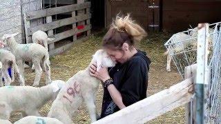 Helle Rambouillet Ranch / National Sheep Improvement Program