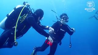 필리핀 다이빙 투어 ㅣ 보홀 돌호 포인트 ㅣ[스쿠버다이빙/scubadiving/코브라다이브] doljo point
