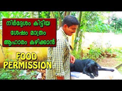 dog training : ' food permission'  Malayalam:kerala dog training : വളര്ത്തു നായയെ പരിശീലിപ്പിക്കാം