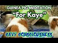 """For Kaye"" GUINEA PIG MEDITATION # 7 Bach Toccata & Fugue – Vent the Volcano #2 FIRE"