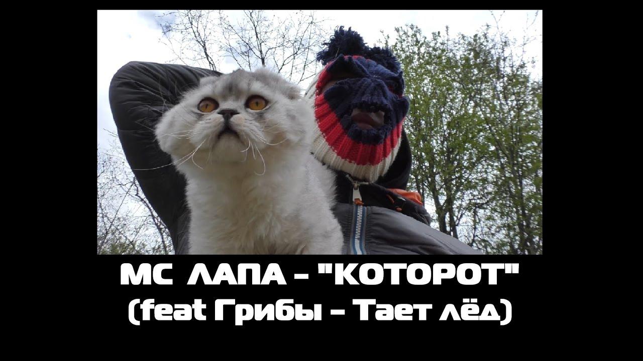 Curver PetLife Туалет-домик для кошек Petonly.ru - YouTube