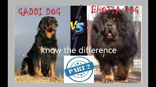 Gaddi dog vs Bhotia dog, know difference and similarities PART 2