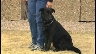 "Cci Prison Dog Training ""go Home Video"""