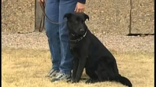 """Cci Prison Dog Training """"go Home Video"""""""