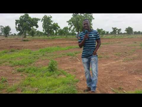 Commercial farmer, northern Ghana