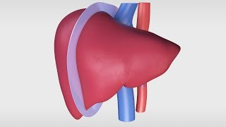 Living Donor Right Hepatectomy Procedure
