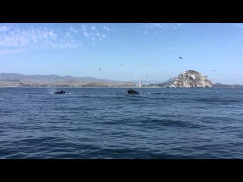 Whale Watch 02 Sept 2015 SubSea Tours Dos Osos
