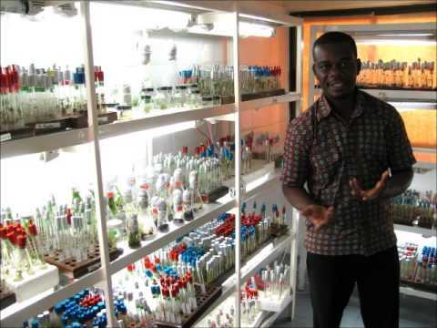 GEOG130 Ghana Health