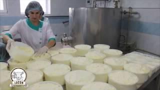 видео: Молочные овцы (lacon, лакон, lacaune), производство овечьего сыра