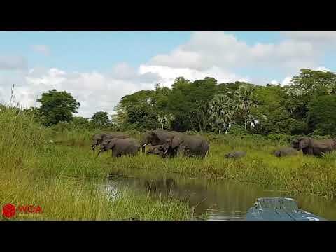 الطبيعة Amazing Elephant Save Baby Elephant From Crocodile Hunting | Animals Hunting Fail