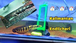 Kalimantan - Endlicheri