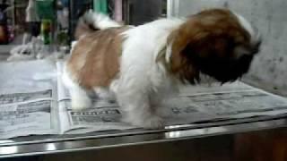 新潟のペットショップや動物病院などペット関連サービス情報を公開する...