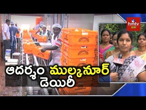 Women Success | Mulkanoor Women's Cooperative Dairy | hmtv