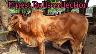 178 | ফিরে দেখা ২০১৮ | Finest Deshal Bulls | Master Class Dhupkhola HaAt Collection | ZbGH 2019