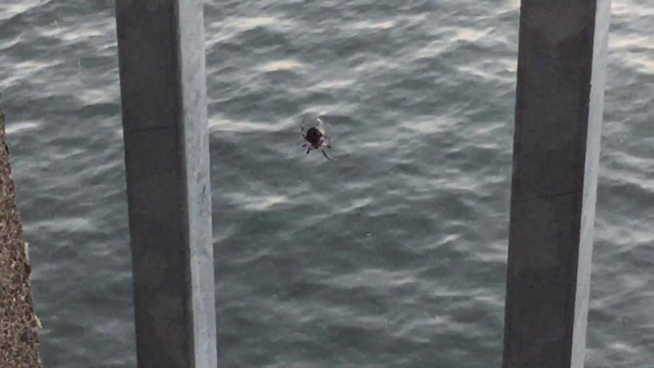 spider documentary
