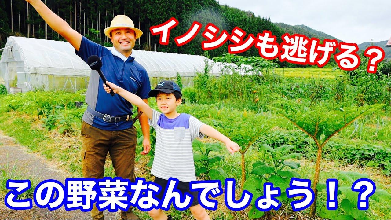 【新企画!】竹内親子のこの野菜なんですか?コーナー+豆知識 よく食べるけどこれは知らない人多いはず