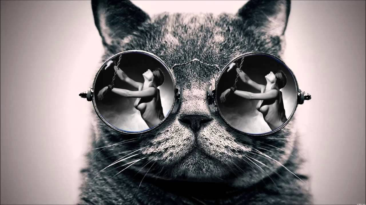 Iphone Wallpaper Trippy Cat S Glasses Youtube