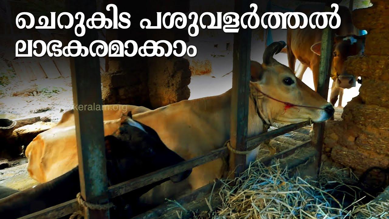 പശുവളര്ത്തല് ലാഭകരമാകാന് | ക്ഷീര കർഷകൻ | Sustainable Cattle Farming | Homestead dairy