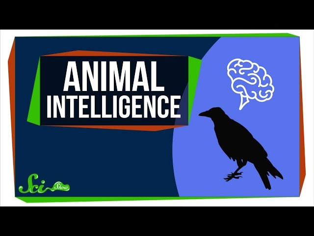 How Smart Are Animals, Really?