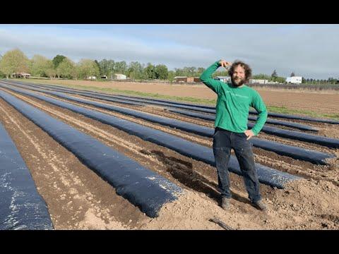 Oregon CBD's Guide On How To Prepare Hemp Fields