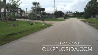 Place Level Expert! Advanced Obedience Training. Off Leash K9 Training, Central Florida