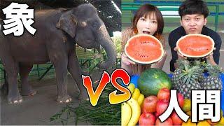 【大食い】Ananpedさんと一緒に象と大食い対決したよ!【木下ゆうか】