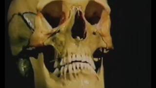 02 Скелет головы