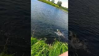 Pike fishing Рыбалка на щуку shorts