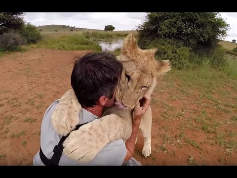 Lion Cubs Walk With Kevin Richardson