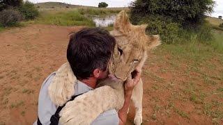 lion cubs walk with kevin richardson
