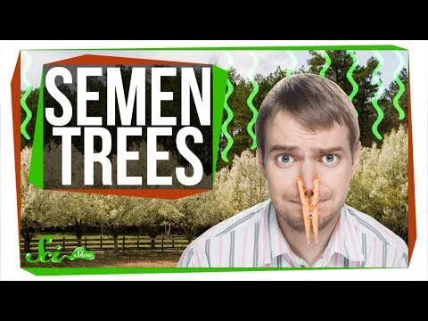 Why Do We Keep Planting Trees That Smell Like Semen?