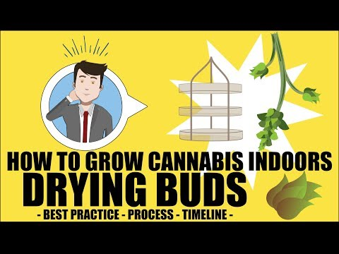Drying Cannabis Plants - How to grow marijuana course for dummies - Growing Cannabis Indoors 101