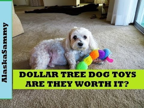 dollar-tree-dog-toys-are-they-worth-it