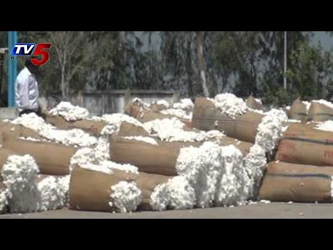 Warangal Cotton Farmers Agitations at Enumamula Market: TV5 News