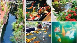 Top 7 quán cafe có hồ cá koi đẹp nhất Quy Nhơn, Bình Định | Beautiful Koi coffee shop in Quy Nhon