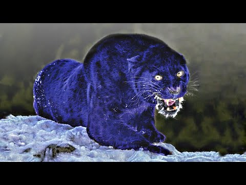 these-are-10-bluest-animals-on-this-planet
