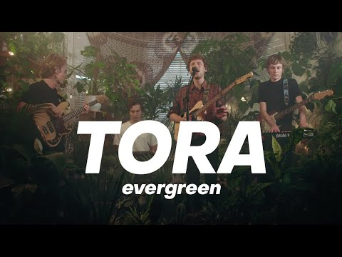 Tora - Similar | evergreen live