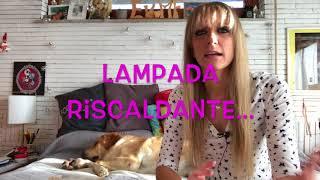15 RIMEDI PER PROTEGGERE IL CANE DAL FREDDO