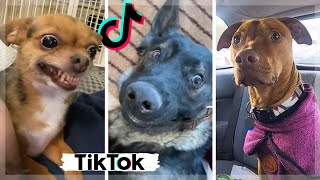 Ultimate Funniest Dogs of TIK TOK Compilation ~ Cutest Puppies of TikTok ~ The Dog Squad ~ May 5