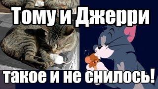 Мышь и Кот Лучшие Друзья История дружбы животных