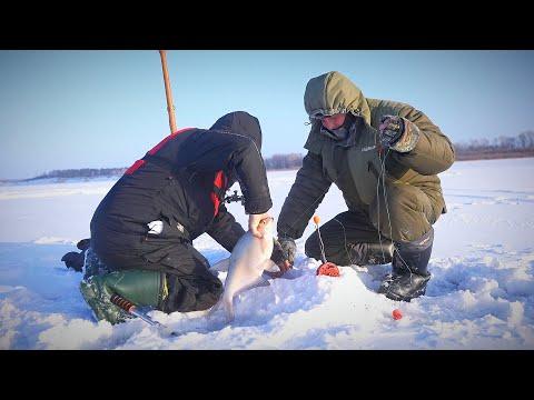 УЕХАЛ В СИБИРЬ НА РЫБАЛКУ и узнал СТРАШНУЮ ТАЙНУ. Рыбалка на крупного леща.  Комбайны на леща.