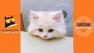I Know I'm Cute 😍 | Cute Cats Video 2019