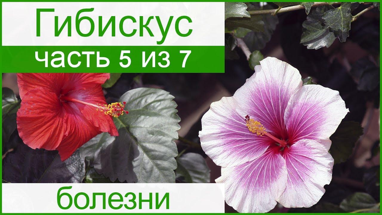 Плейкаст спасибо вам за цветы