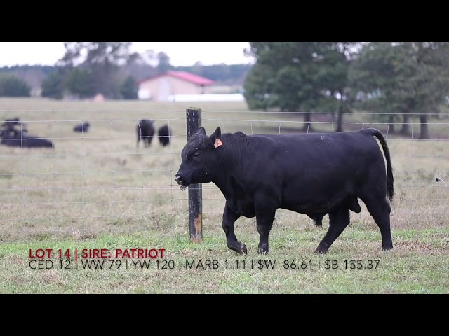 Edgewood Angus Lot 14
