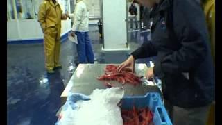 Confraria de pescadors de palamos