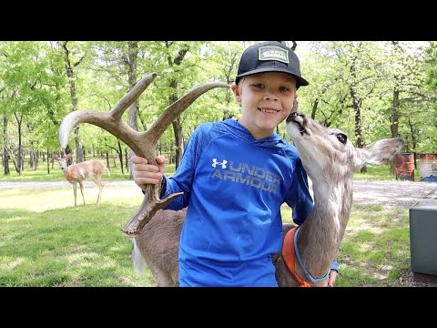 Shed Hunting with a Pet DEER!